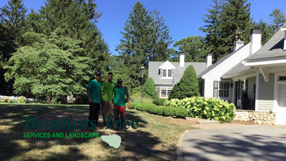 Brothers Tree Services & Landscape