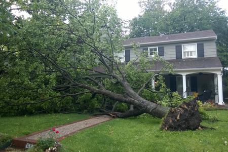 tree brothers Storm Damage brothers tree