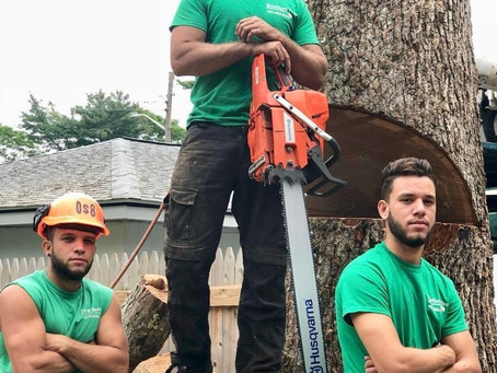 We Are The Brothers | Tree Removal