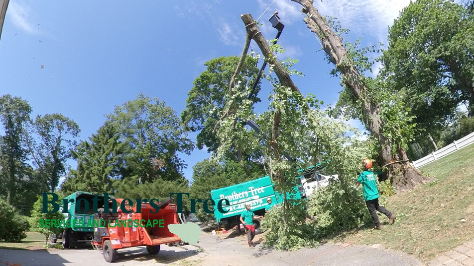 Brothers Tree Services & Landscaping