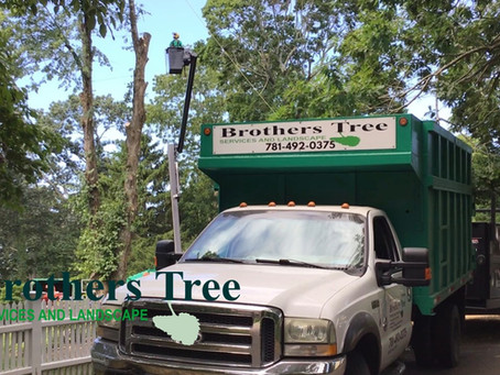 The Brothers | The Highest Quality Tree Services