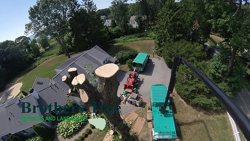 Brothers Tree Services & Landscape 28.JP