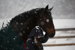 How Horses Can Help Change Our Self-Perceptions