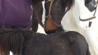 The Healing Nature of Horses