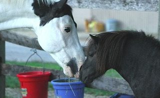 A Horse, Attachment and Beauty: a Therapeutic Journey