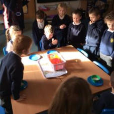 Class Science Experiment