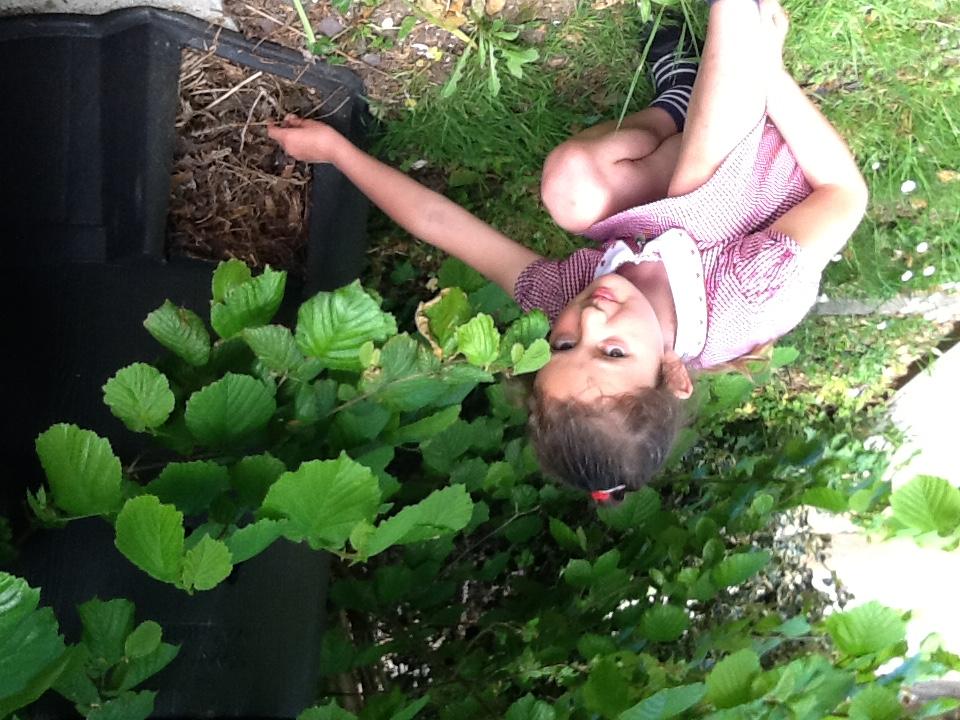 Bin compost