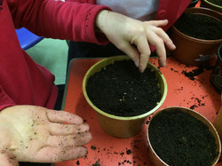 Spring seed planting