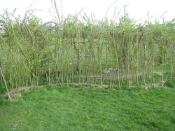 Our Willow Tunnel