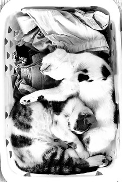 My Tiny Tigers, inspiration for my poem in the Feline Utopia Anthology