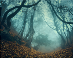 There is a darkness in this forest, an end that rivals death itself.  ~ from my poem 'The Other Woman'