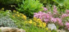 Rock Garden Kathe Worrell copy_edited.pn