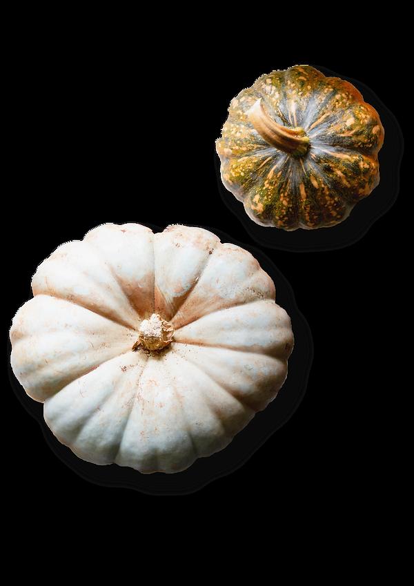 Pumpkins_edited.png