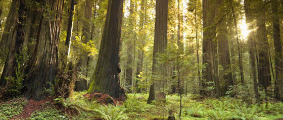 Why is sustainable forest management important in cardboard production?
