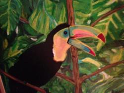 Colorful Myna Bird
