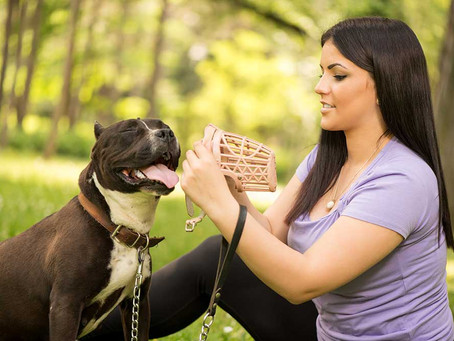 Perros Potencialmente Peligrosos (¿o puro amor?)