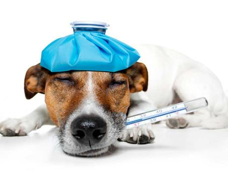 ¿Un seguro de Salud para tu mascota?
