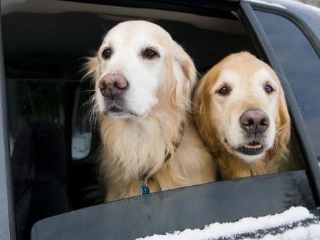 Cómo acostumbrar a tu perro a viajar en coche