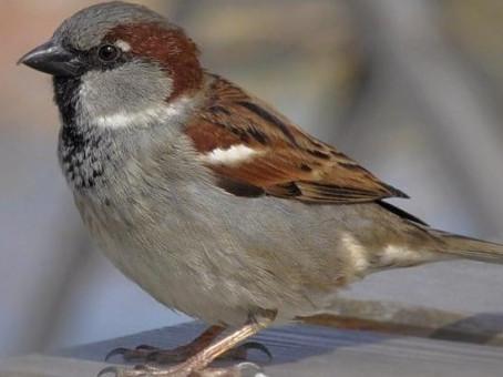 Si quieres conocer la salud de tu ciudad mira al cielo y cuenta las aves