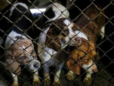 Holanda consigue ser el primer país sin perros callejeros