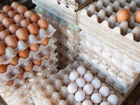 El dilema del huevo: ¿cuál es la diferencia entre el blanco y el marrón?