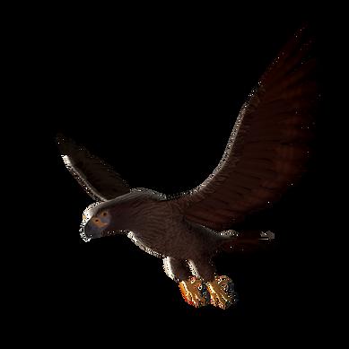 Insurmountable_Eagle_2.png