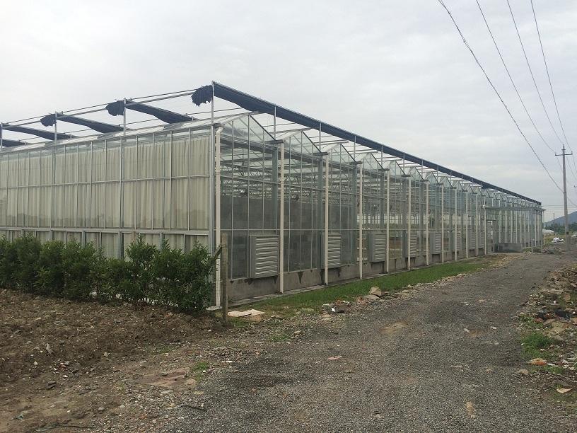 glass greenhouse 1
