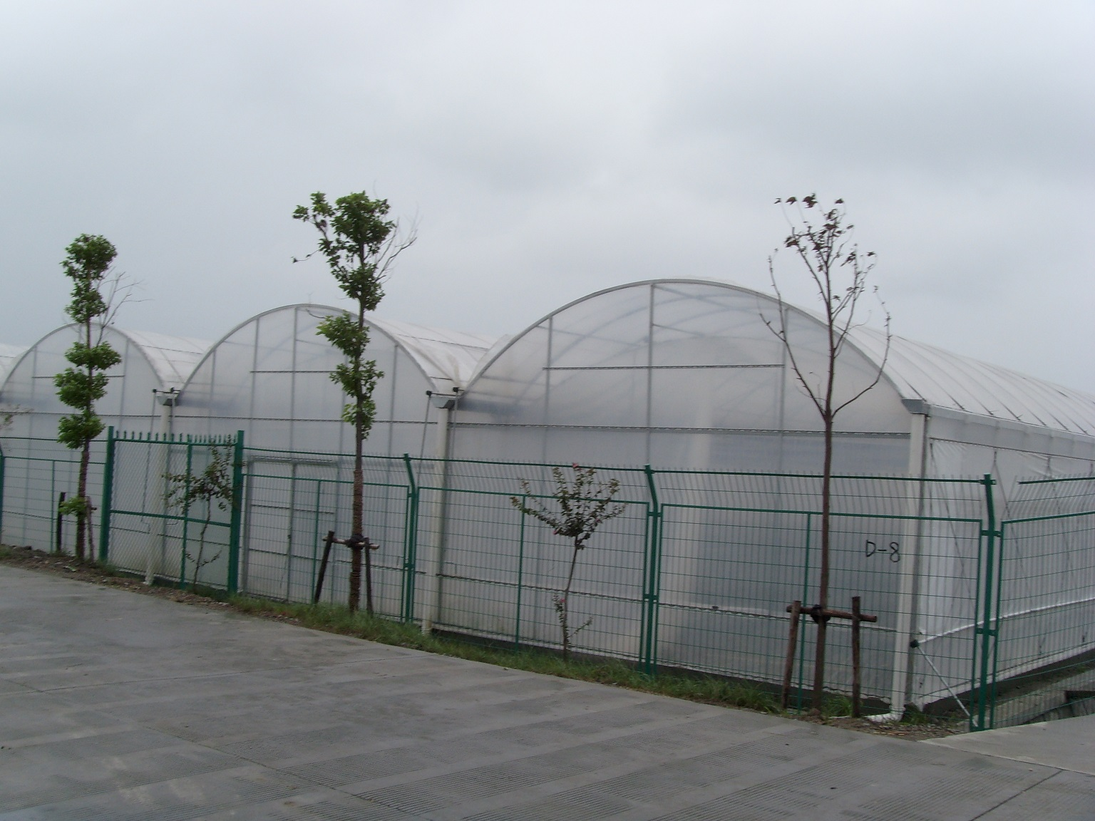 Chinese standard 1