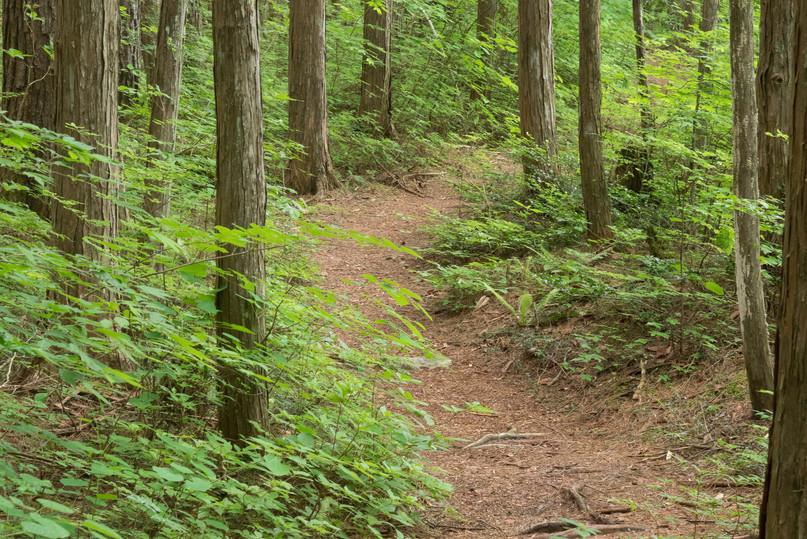 trail13.jpg