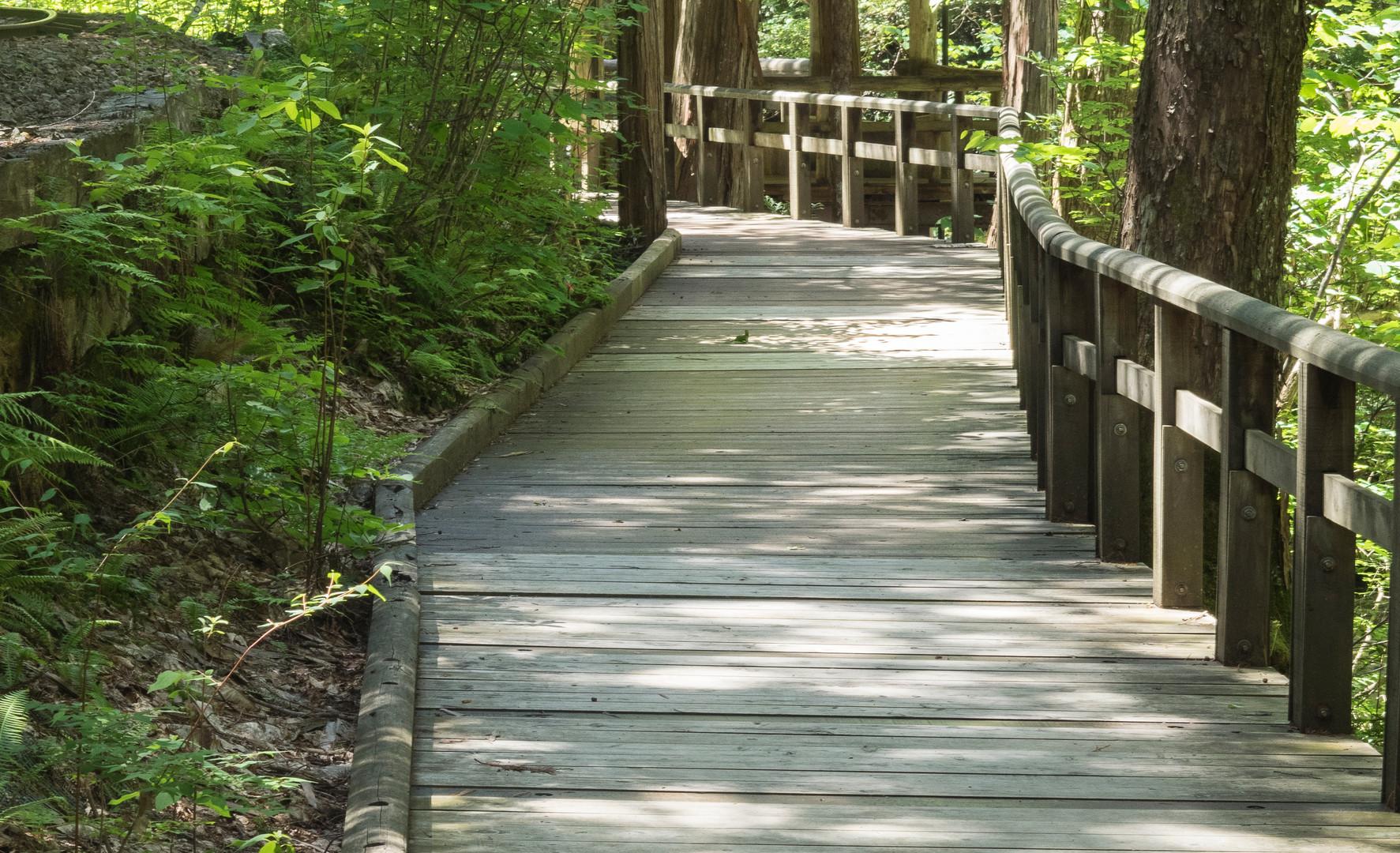 trail3.jpg