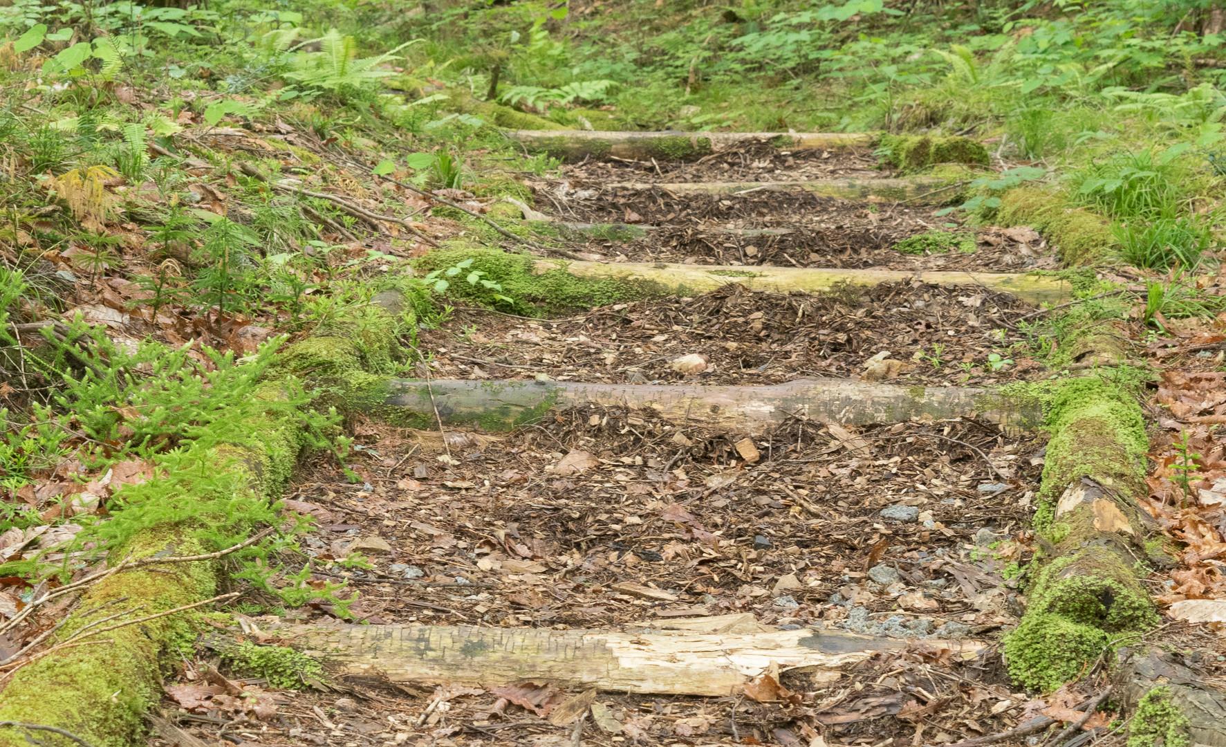 trail32.jpg
