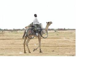 Un chameau porte vélo !