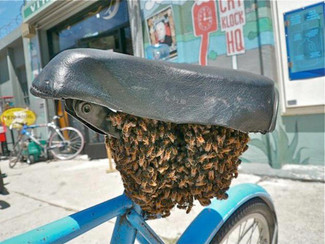 Ecolo même à vélo !