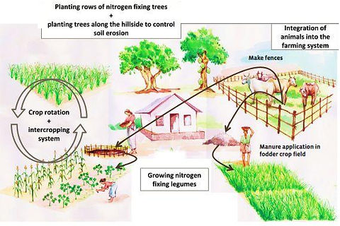 Some-organic-farming-methods-to-test-in-