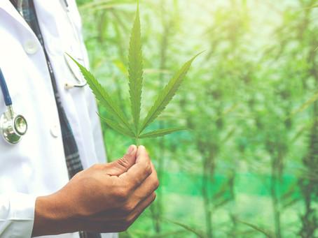 Cannabis medicinal pode ser alternativa no tratamento de endometriose