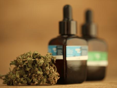 Uso de cannabis medicinal avança no tratamento da fibromialgia, mas custo e burocracia impedem acess