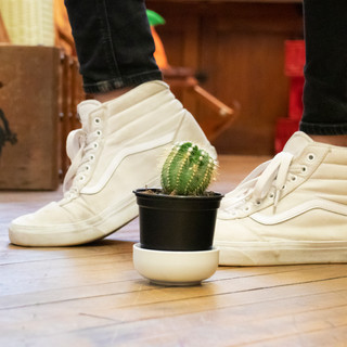 series_cactus_shoes(cropped).jpg
