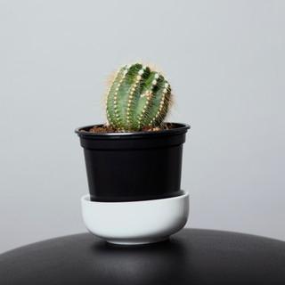 series_cactus_headshot(cropped).jpg