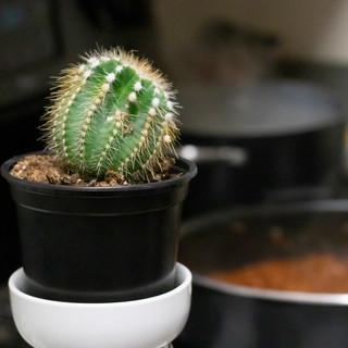 series_cactus_stovetop(cropped).jpg