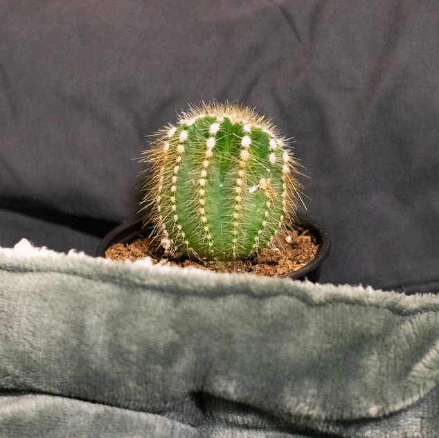 series_cactus_bed(cropped).jpg