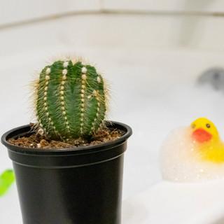 series_cactus_bathtub_duck(cropped).jpg