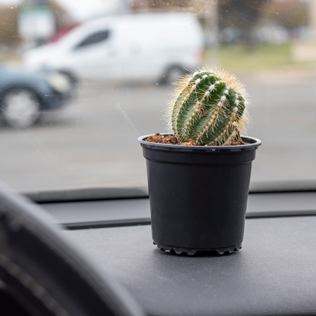 series_cactus_windshield.jpg