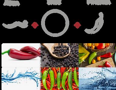 estudos_agua com pimenta-02.png