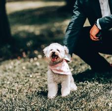 Spotty Bandana Pup