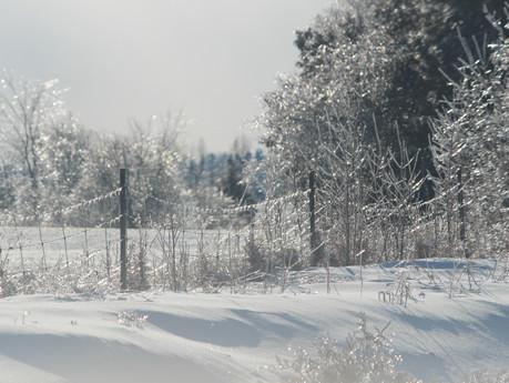 Some Enchanted Freezing...