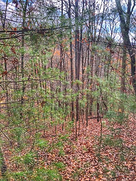 Blue Ridge Treehouse Cabins Location