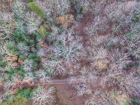 Blue Ridge Luxury Treehouse Location