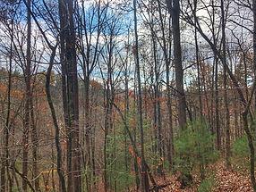 Blue Ridge Treehouse Mountain View