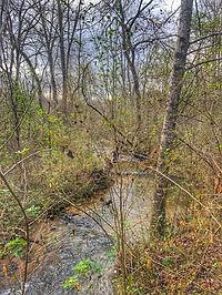 Creek in Blue Ridge Georgia Treehouse Site