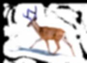 cerf f blanc.png